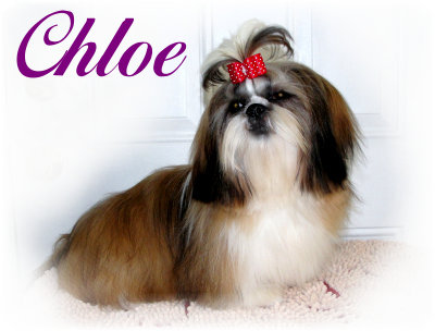 5-12-20 Chloe-706