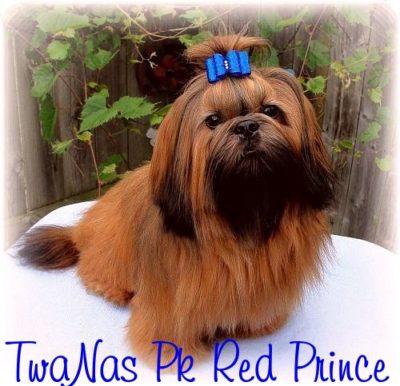 Prince1-2