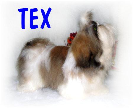 SIR-TEX4