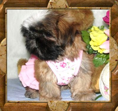 Baby Twinkle Star - Thank You so much to Pamela of Ohio...what a great little girl!