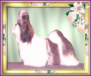 Ch. Pe-Kae's Pretty In Pink Ch. Pe-Kae's Pyromania X Pe-Kae's Head in the clouds  Finished her championship at 9 months of age.  Champion producer